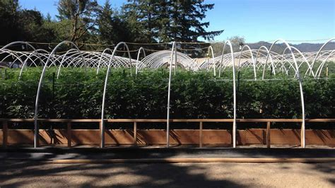 Humboldt County Search Photos Humboldt County Sheriff S Office Seizes 26 5 Million In Marijuana Plants