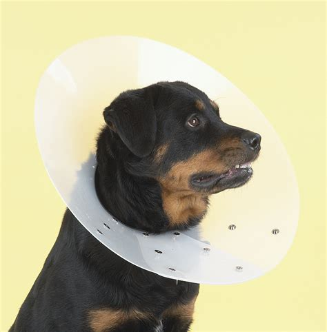 elizabethan collar for dogs proguard pets inc wholesale prices on exclusive and cat muzzles grooming