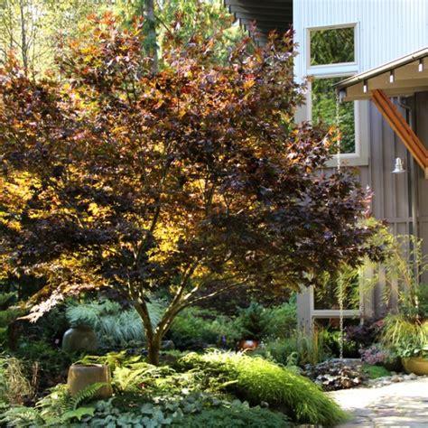Japanische Gartengestaltung by Japanische Gartengestaltung Aequivalere