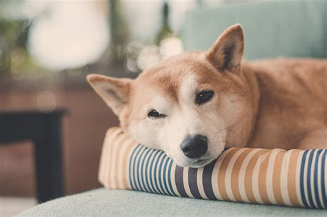 dogs that can be left alone how can a be left home alone petspot