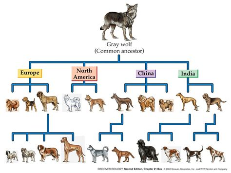 evolution of dogs canine timeline evolution