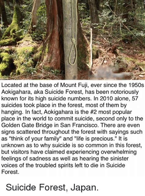 why does japan have such a high suicide rate bbc news 25 best memes about suicide forest japan suicide forest