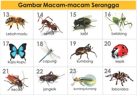 Mengenal Lingkungan Dan Hewan 3 Bahasa Seri Kamus Bergambar gambar jenis macam hewan serangga freewaremini