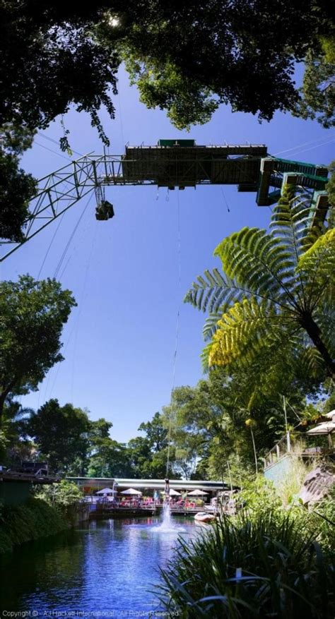 swinging holiday packages cairns info com holiday packages tours bungy jump