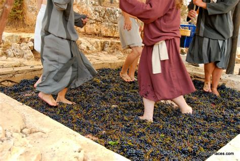 Wedding At Cana Wine Or Grape Juice by Bibleplaces Picture Of The Week Treading Winepress