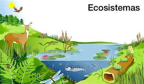 imagenes de ecosistemas naturales 191 qu 233 es un ecosistema 191 qui 233 n lo forma definici 243 n