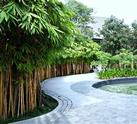 Lu Hias Pagar Rumah 7 jenis tanaman untuk pagar rumah bertema alam
