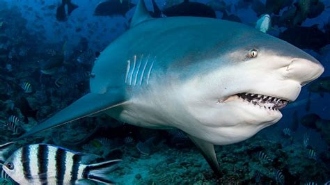 careful   swim  sharks    freshwater