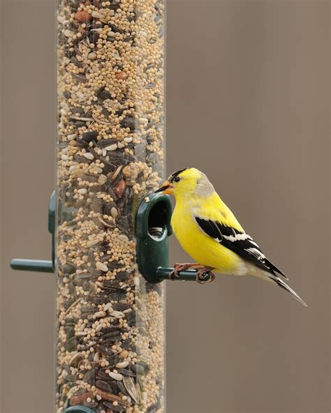 international migratory bird day get outside and go