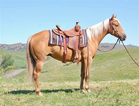 equine dissertation ideas 293 best senior thesis ideas images on horses