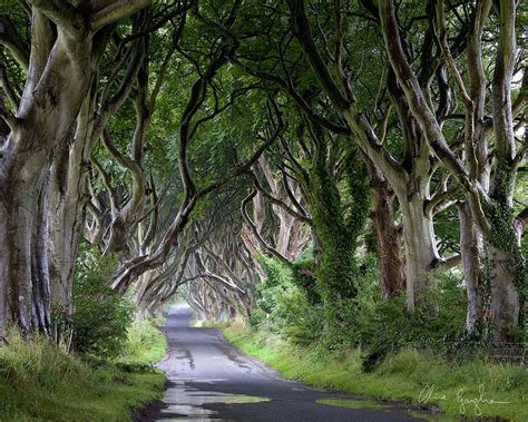 Dso Gamis Naura Syar I the stunning tree tunnel you saw on of thrones is