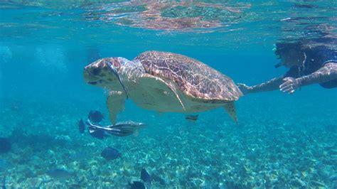 catamaran snorkeling belize snorkeling with sea turtles belize sailing vacations