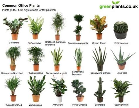 common tree like houseplants common office plants office different shapes empty spaces and offices