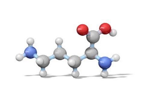 alimenti contengono arginina ornitina amminoacido il portale scientifico per