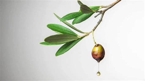 Olive Acne by Olive For Acne How It Works Research And More