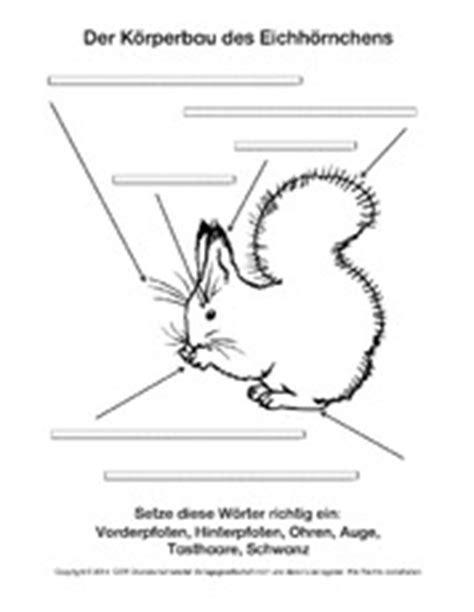 Eichhörnchen Im Winter 4283 by Unterrichtsmaterial F 252 R Projekte In Der Grundschule