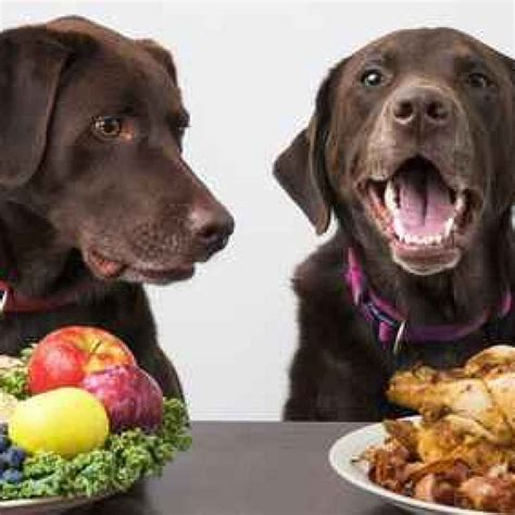 alimentazione per cani casalinga alimentazione casalinga per il la dieta barf