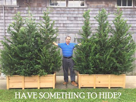 Privacy Planter by Portable Privacy Screen Planter Rentals Darts Tree Farm