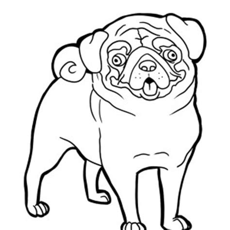 pig the pug colouring pages pug coloring page color