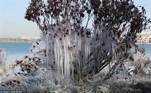 Tree Icicles - beautiful china photos show trees frozen into place by
