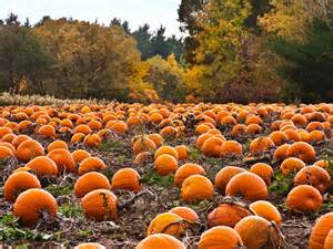 Pumpkin Patch 27 Awesome Things To Do In Chicago This Fall Page 20 Of