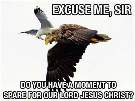 Funny Bird Memes - on this was your pet funny bird meme