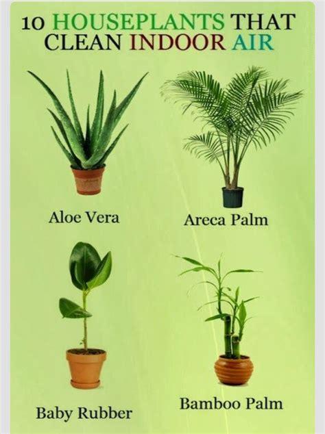10 houseplants that clean the air urban planters 10 plants that clean indoor air trusper