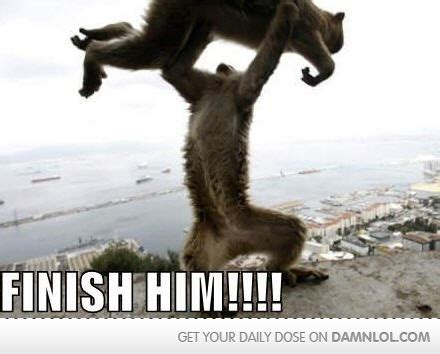 monkey pictures with captions 23 best monkey business images on monkeys