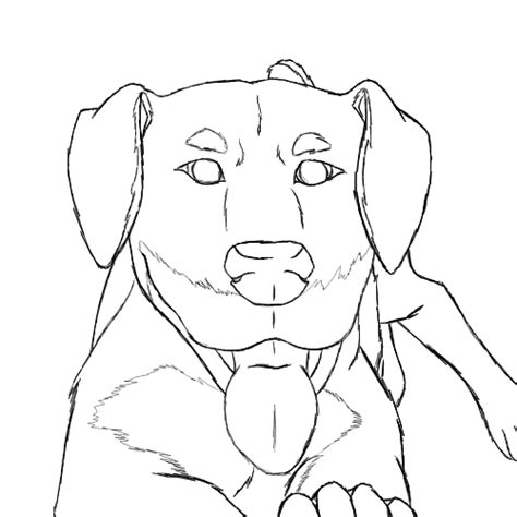 rottweiler coloring book rottweiler coloring pages coloring pages