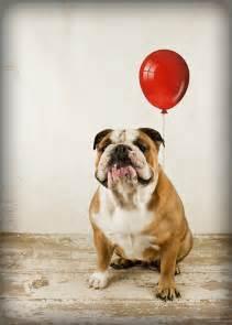 quot bulldog birthday wish quot by mibellamore redbubble