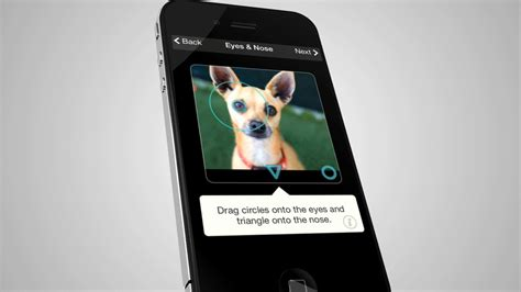 for dogs app recognition for dogs fuels new app san diego county news center