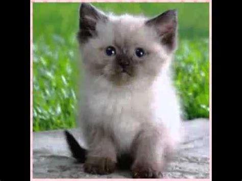 imagenes de cumpleaños lindos os 7 gatos mais lindos do mundo youtube