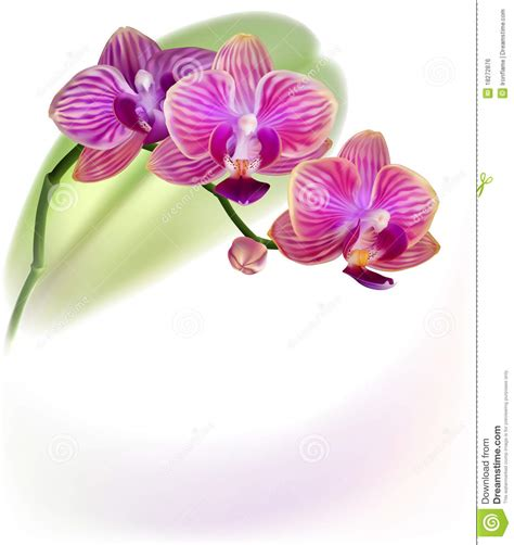 Realistic Purple Orchid Flower Stock Vector - Image: 18272876 Microsoft Garden Clipart