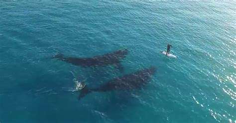 breathtaking drone footage of whales deciding what to do