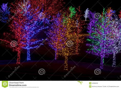 wrapped in lights trees wrapped in led lights for stock photo