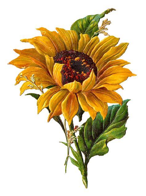 Flower Bunga Vintage Second Preloved Import antique images digital stock sunflower artwork flower clip