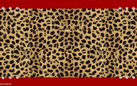 printed wallpapers cheetah backgrounds wallpaper cave