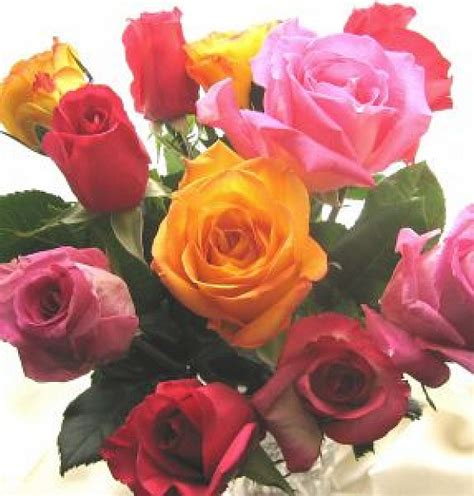 imagenes de rosas descargar gratis ramo de rosas descargar fotos gratis