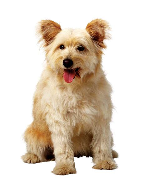 healthy dogs pet corner herbs for healthy dogs