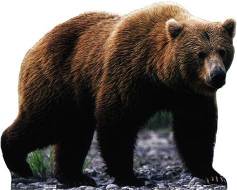 Atlas Binatang Mamalia 2 beruang grizzly dunia binatang