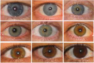possible eye colors yann klimentidis weblog oca2 and eye color