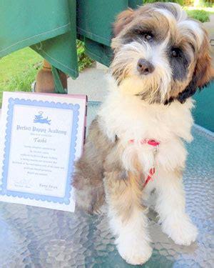 the puppy academy puppy academy