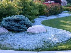 1000 images about ground cover on pinterest lawn