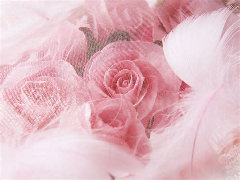 themes of rose wedding roses backgrounds background