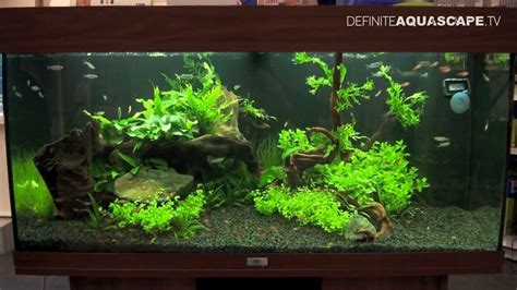 aquarium aquascaping ideas aquascaping aquarium ideas from petfair 2013 ł 243 dź