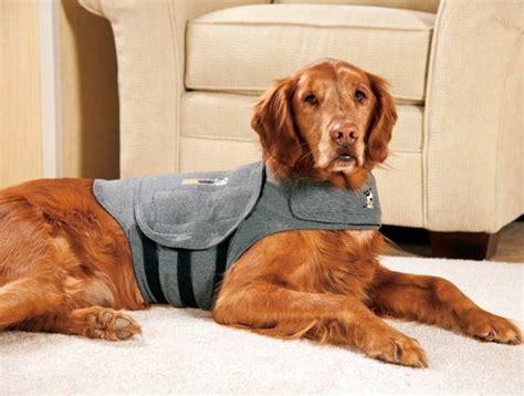 thunder jacket  dogs petswithloveus
