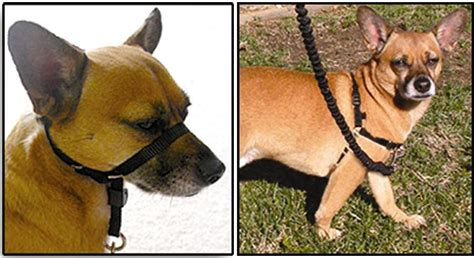 how to your to walk without pulling leash how to walk a that pulls