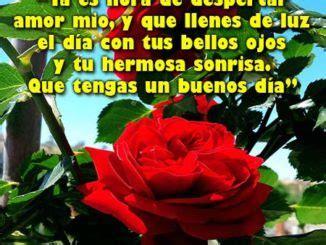 imágenes de buenos dias mi amor con rosas imagenes de buenos dias mi amor para whatsapp rosas de amor