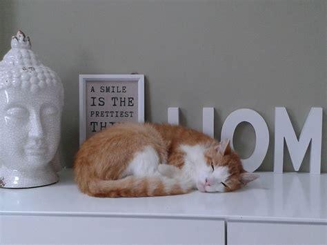 arredamento per gatti arredare casa per gatti ispirazione design casa