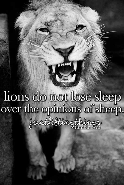 Do Lions Shed lions do not lose sleep the opinions of sheep words phrases sheep